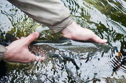 fishing, catch and release, fish, fishes, catch and release fishes, catch and release fishing,