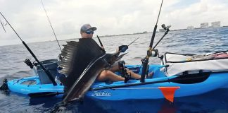 Yakin for sailfish