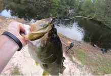 HUGE SWIMBAIT vs REAL LIVE BAIT