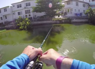 canal_fishing_saint_martin_tarpon2