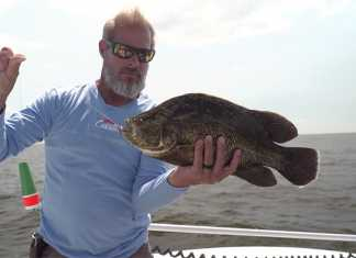 tripletail, biloxi, fishing
