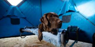 ice fishing with your dog